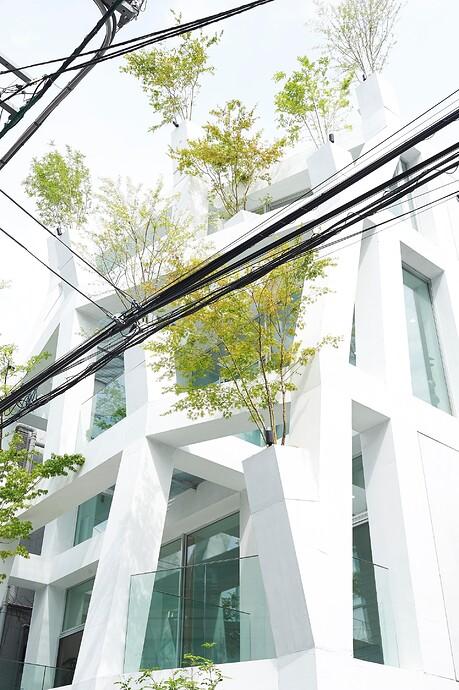 Omotesando-Branches_8267small